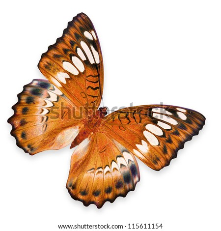 Orange Butterfly flying - stock photo