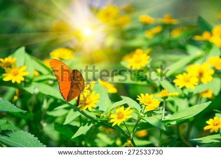 Orange butterfly on a yellows sunflower - stock photo