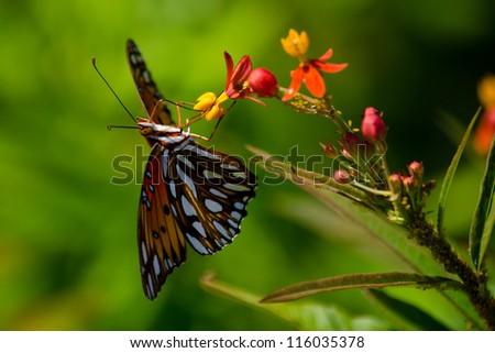 Orange Butterfly on Flowers - stock photo