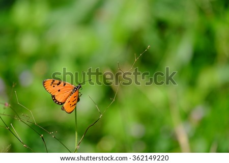 Orange butterfly on grass and  green background