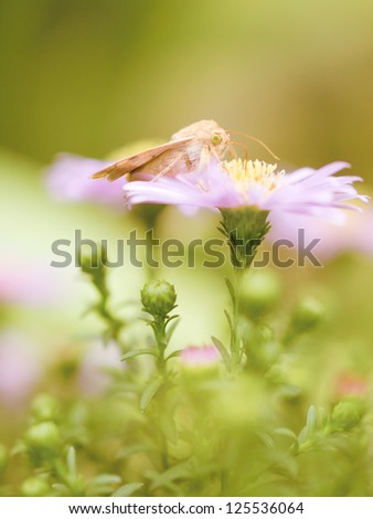 Orange butterfly on pink flower with green background blur . Shallow depth of field. Selective focus. Art - artistic macro. - stock photo