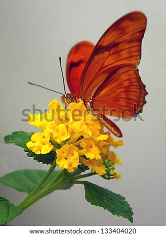Orange butterfly on yellow flower - stock photo