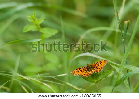 orange butterfly sitting on a green leaf