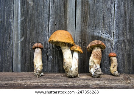 orange-cap boletus mushrooms fungi on old wooden background - stock photo