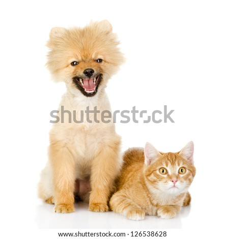 orange cat and dog. cat looking at camera. isolated on white background