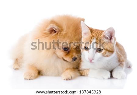 orange cat and spitz dog together. isolated on white background - stock photo
