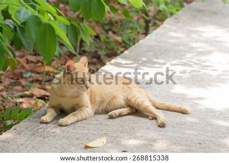 Orange cat in autumn leaves close up photo. Animal portrait - stock photo