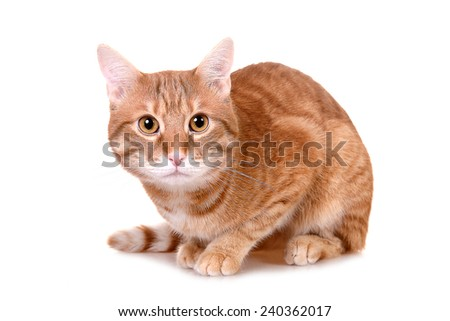 Orange cat looking at you