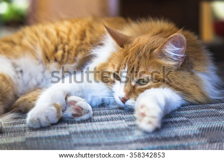 Orange cat lying in bed