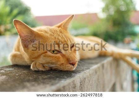 orange cat lying on wall portrait photo - stock photo