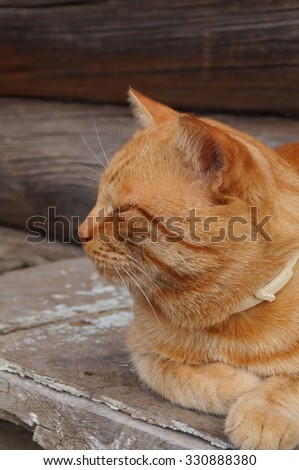 Orange cat sitting on a bench and smiling - stock photo