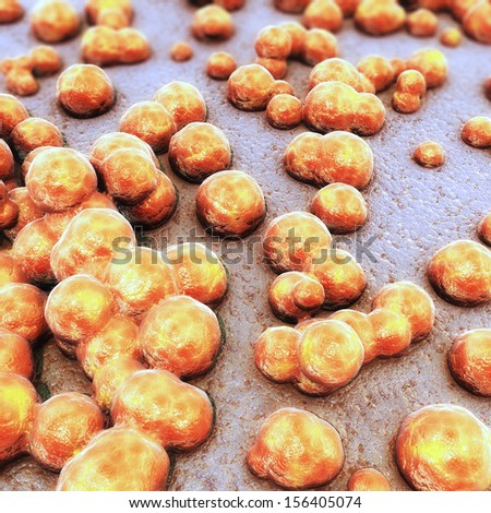 Orange Coccus Bacteria Colony - stock photo