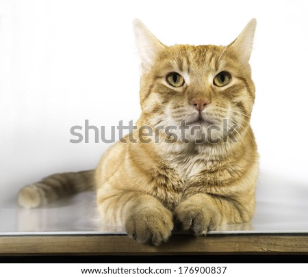 Orange color cat on white background