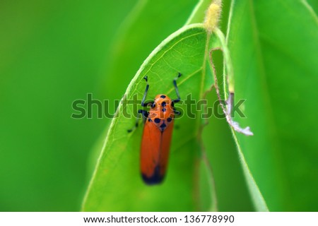 colorful leaf hopper by - photo #26