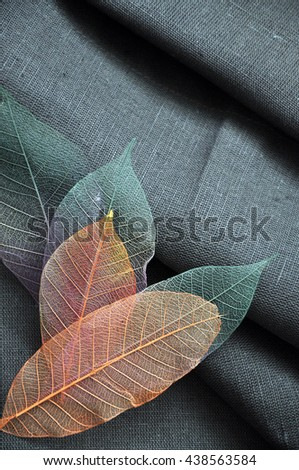 Orange color skeleton leaves on gray background - stock photo