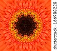 Orange Concentric Flower Center Macro Close-up. Mandala Kaleidoscopic design - stock photo
