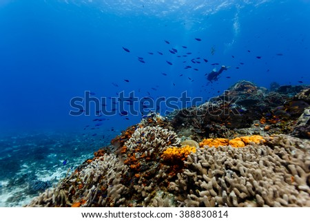 Orange coral and sponges on coral reef in Caribbean - stock photo