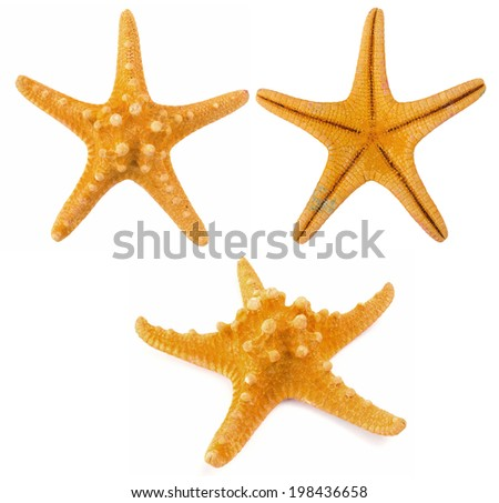 orange coral isolated - stock photo