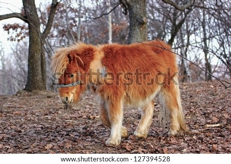 orange donkey standing in the forest in late autumn - stock photo