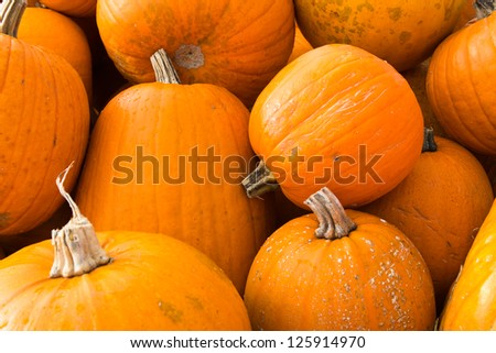 Orange Fall Pumpkins