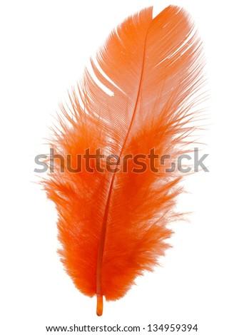 Orange feather isolated on white background cutout - stock photo