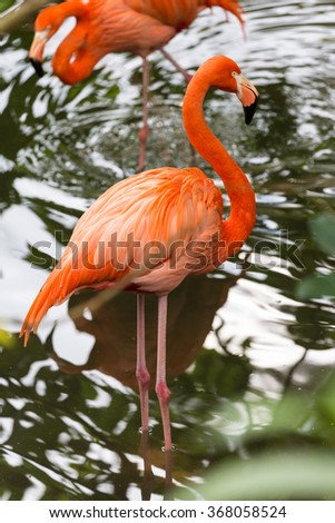 Orange flamingo in Okinawa, Japan -2