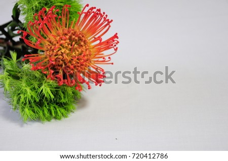 https://thumb1.shutterstock.com/display_pic_with_logo/167494286/720412786/stock-photo-orange-flower-720412786.jpg
