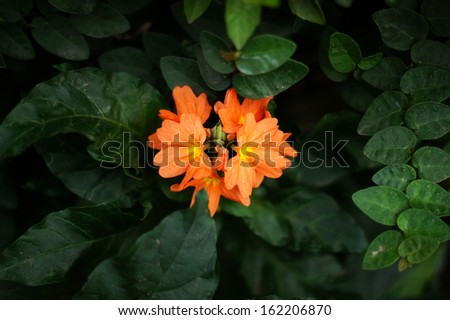 Orange flower among deep green leaves - stock photo