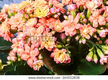 orange flower and green leaf floral background - stock photo