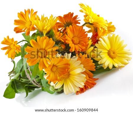 orange flower bouquet heap of calendula close up macro Isolated on white background - stock photo