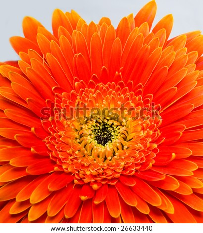 Orange flower close up