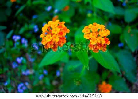 Orange flower in the garden - stock photo