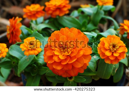Orange Flower in the Garden