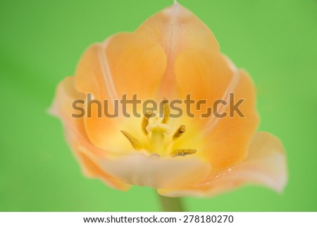 Orange Flower isolated against green - stock photo