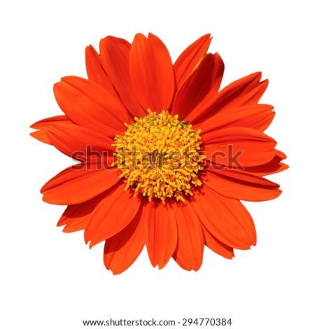 Orange flower  isolated on white background - stock photo