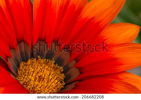 orange flower macro - stock photo