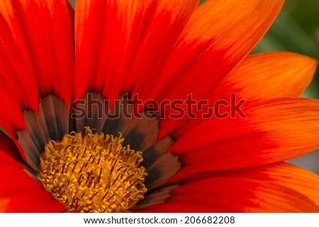 orange flower macro - stock photo