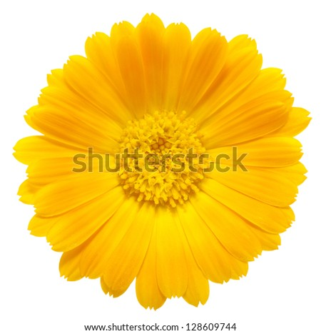 orange flower on a white background - stock photo