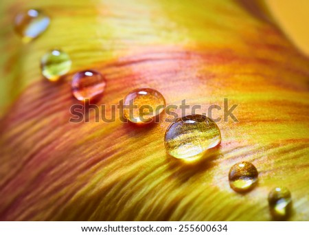 Orange flower petal with water drops  - stock photo