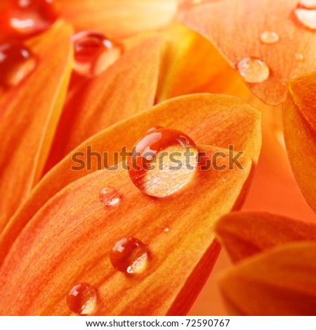 Orange flower petals with water drops on it - stock photo