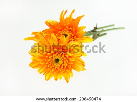 Orange Flowers Isolated on White Background.