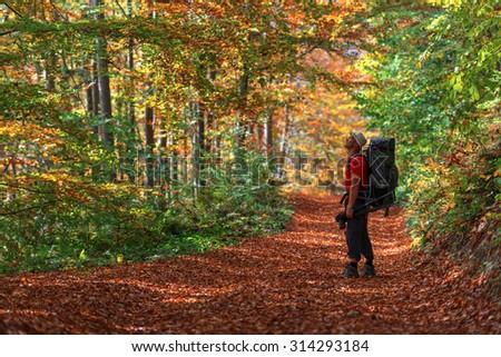 orange forest on autumn season - stock photo