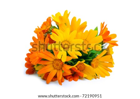 orange gerber flowers