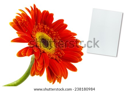 orange gerbera flower and note