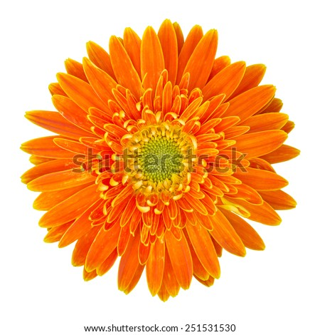 orange gerbera flower isolated on white with clipping path - stock photo