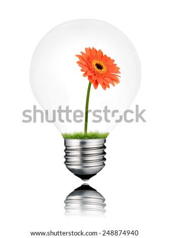 Orange Gerbera Flowes Growing inside Light Bulb Isolated on White Background. Light bulb has a reflection - stock photo