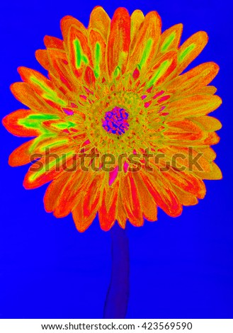Orange gervera flower on blue background, painting in watercolours - stock photo