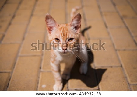 orange/ginger small kitten on the street in a sunny day looking at the camera