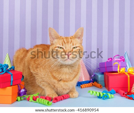 Orange ginger tabby cat on light blue surface with purple stripped background piles of presents, party hats and curling ribbon.