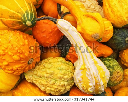 Orange gourds of different shapes at the autumn market. - stock photo